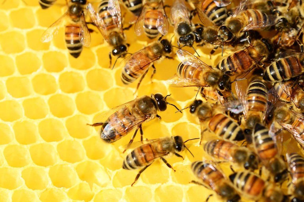 bal yapan arılar